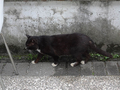 Cats of Houtong, #8461