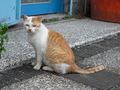 Cats of Houtong, #8464