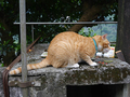 Cats of Houtong, #8468