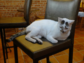 Cats of Houtong, 小湯包@217Cafe, #8470