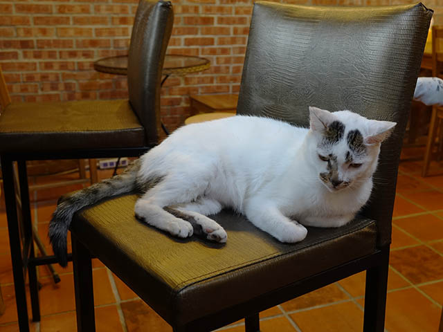 Cats of Houtong, 小湯包@217Cafe, #8471