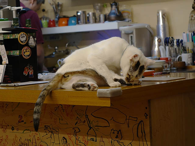Cats of Houtong, 小湯包@217Cafe, #8474