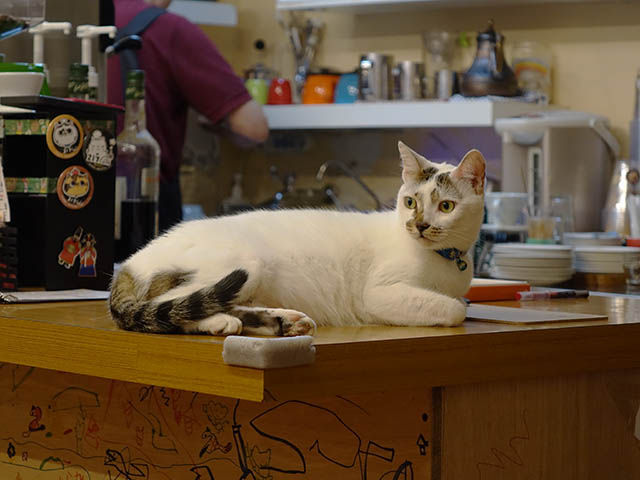 Cats of Houtong, 小湯包@217Cafe, #8475