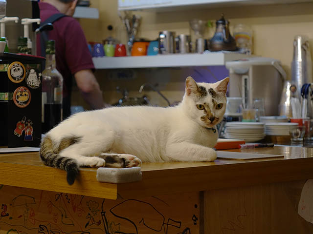 Cats of Houtong, 小湯包@217Cafe, #8477