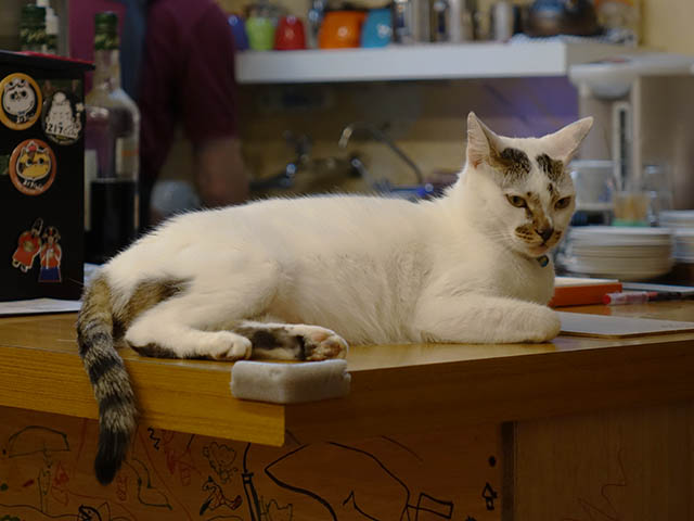 Cats of Houtong, 小湯包@217Cafe, #8479