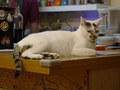 Cats of Houtong, 小湯包@217Cafe, #8480