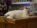 Cats of Houtong, 小湯包@217Cafe, #8481