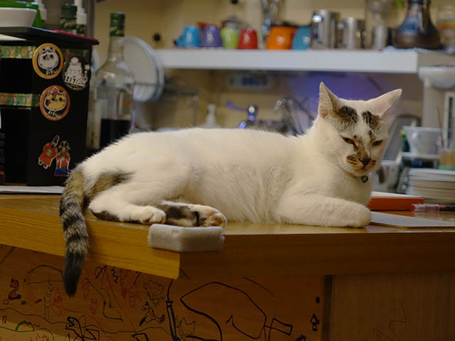 Cats of Houtong, 小湯包@217Cafe, #8483
