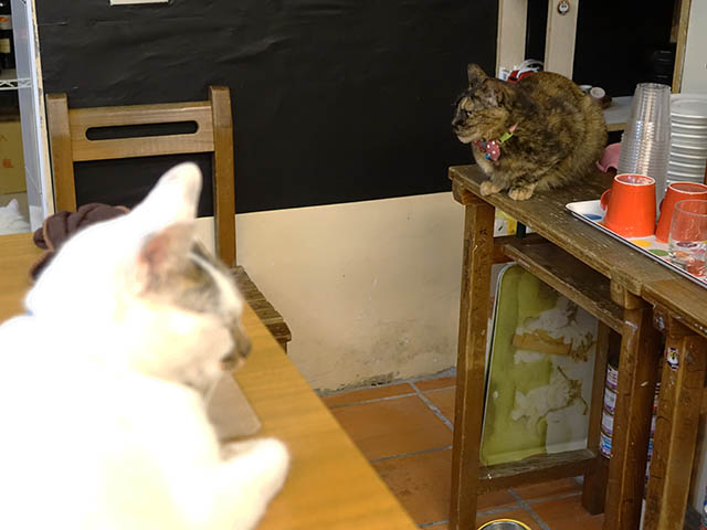 Cats of Houtong, 花皮&小湯包@217Cafe, #8485