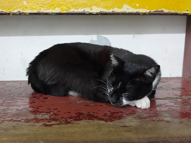 Cats of Houtong, #8495