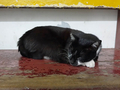 Cats of Houtong, #8496
