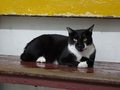Cats of Houtong, #8501