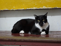 Cats of Houtong, #8502