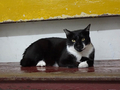Cats of Houtong, #8503