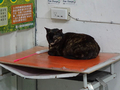 Cats of Houtong, #8506