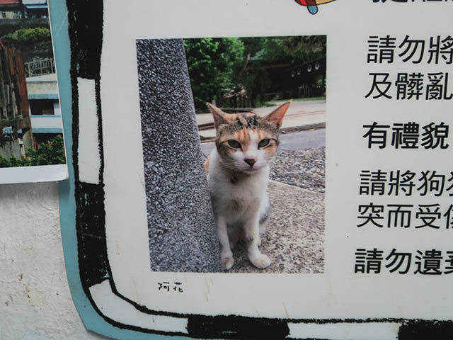 Cats of Houtong, #1359