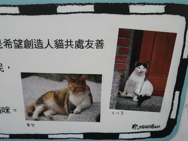 Cats of Houtong, #1360