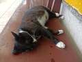 Cats of Houtong, #8508