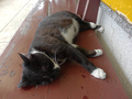 Cats of Houtong, #8509