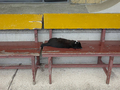 Cats of Houtong, #8514