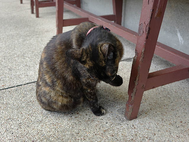 Cats of Houtong, #8517