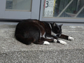 Cats of Houtong, #8520