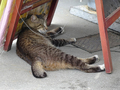 Cats of Houtong, #8531
