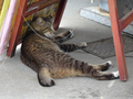Cats of Houtong, #8532