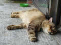 Cats of Houtong, MoggyCafe, #8558