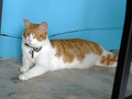 Cats of Houtong, 將將@MoggyCafe, #8561