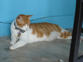 Cats of Houtong, 將將@MoggyCafe, #8563