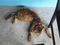 Cats of Houtong, MoggyCafe, #8564