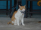 Cats of Houtong, 將將@MoggyCafe, #8568
