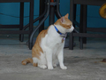 Cats of Houtong, 將將@MoggyCafe, #8569