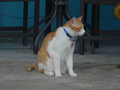 Cats of Houtong, 將將@MoggyCafe, #8570