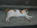 Cats of Houtong, #8572