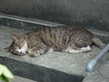 Cats of Houtong, #8573