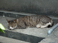 Cats of Houtong, #8577
