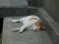 Cats of Houtong, #8579