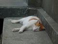 Cats of Houtong, #8580