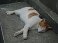 Cats of Houtong, #8582