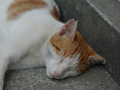 Cats of Houtong, #8583
