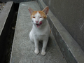Cats of Houtong, #8585