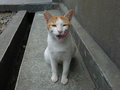Cats of Houtong, #8586