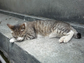 Cats of Houtong, #8587