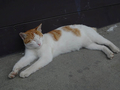 Cats of Houtong, #8589