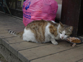 Cats of Houtong, #8601