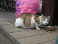 Cats of Houtong, #8604