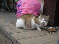 Cats of Houtong, #8605