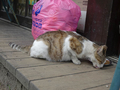 Cats of Houtong, #8606